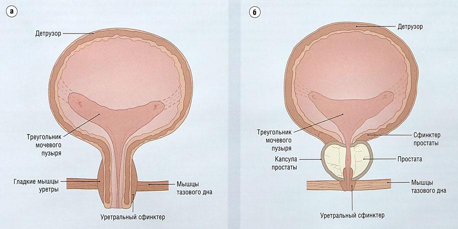 непроизвольное семяизвержение у мужчин: