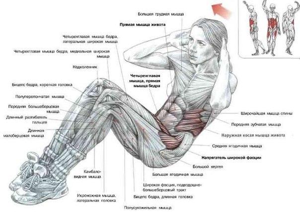 картинки для упражнения пресса