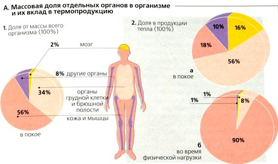 vliyanie-spermi-na-organizm-sportsmenok