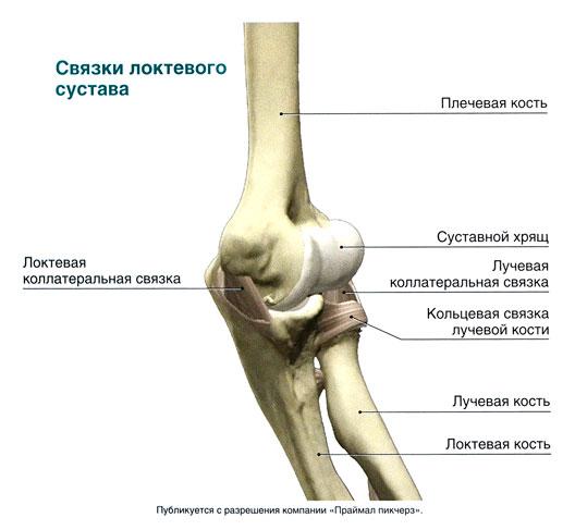 Про локтевой сустав узи эластография коленного сустава