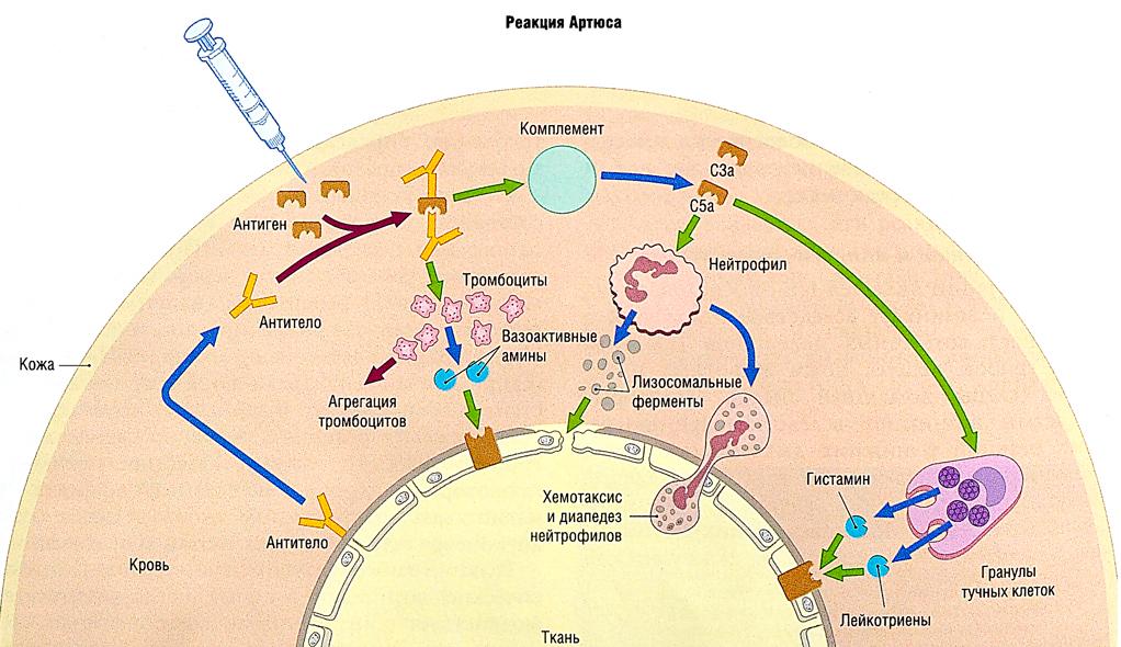 препараты от аллергии 5 поколения