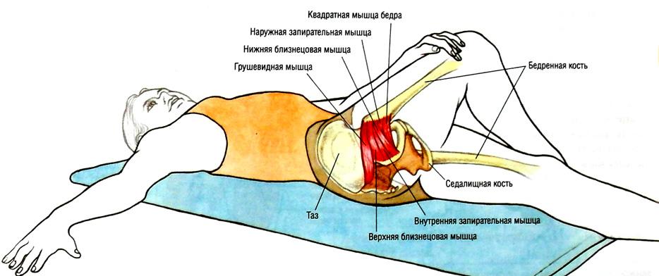 Упражнения на растяжку тазобедренный сустав волейбол плечевого сустава