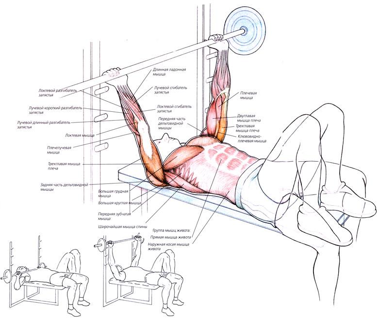 Может ли болеть тазобедренный сустав от спины