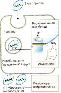 плеконарил инструкция по применению - фото 4