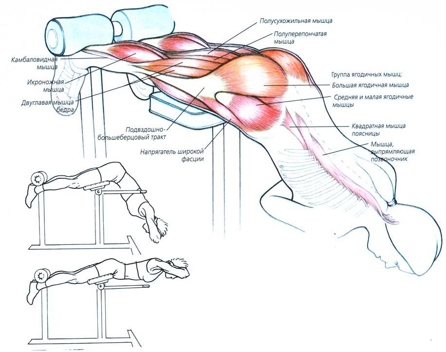 Упражнение для лечения позвоночника видео