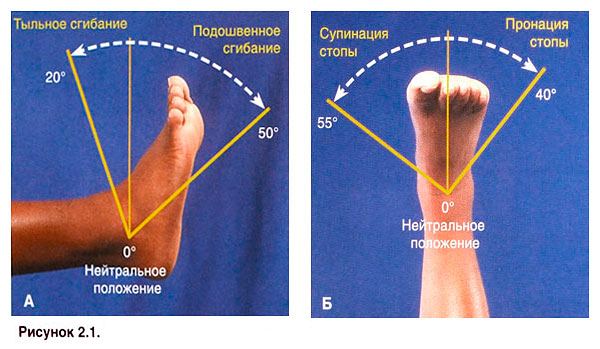 Движение в голеностопном суставе неправильное развитие коленного сустава удетей с о-образным искривлением ног