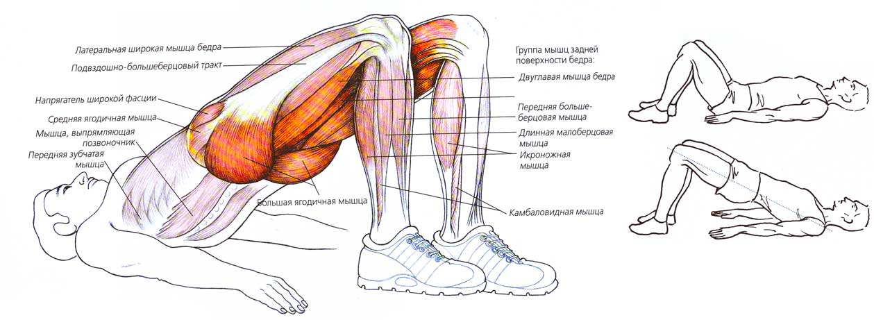 Укрепляем мышцы в домашних условиях