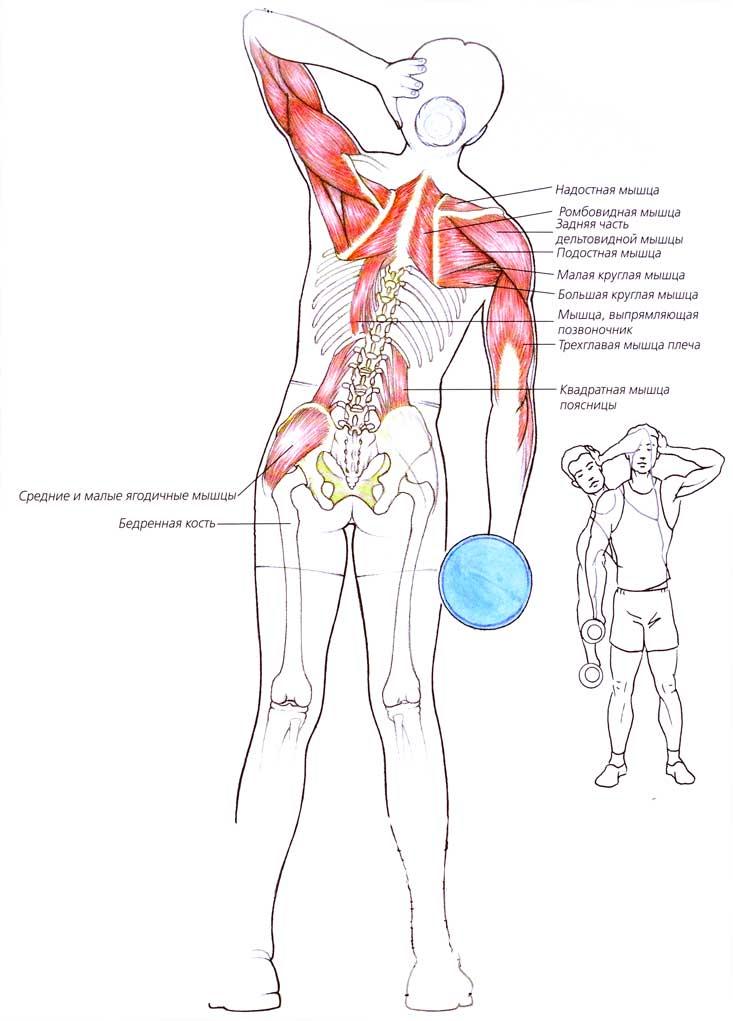 наклоны вперед какие мышцы работают
