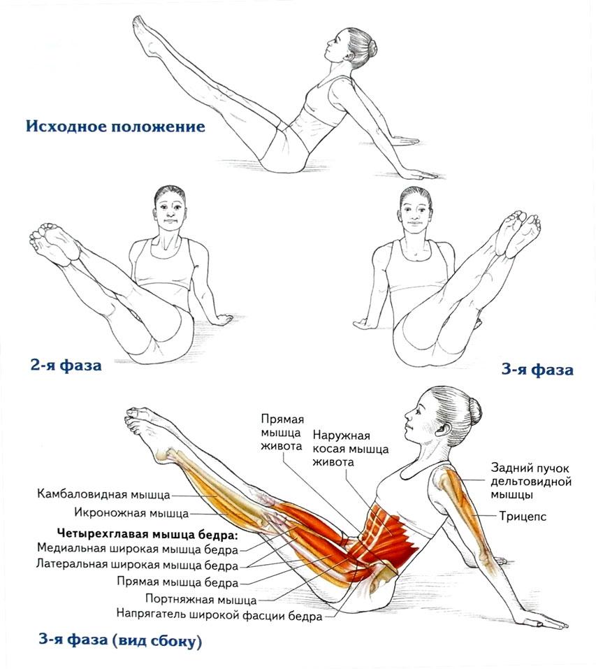 анатомия пилатеса pdf