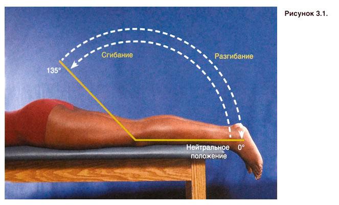 Коленный сустав движения лечение вывиха тазобедренного сустава без гипса