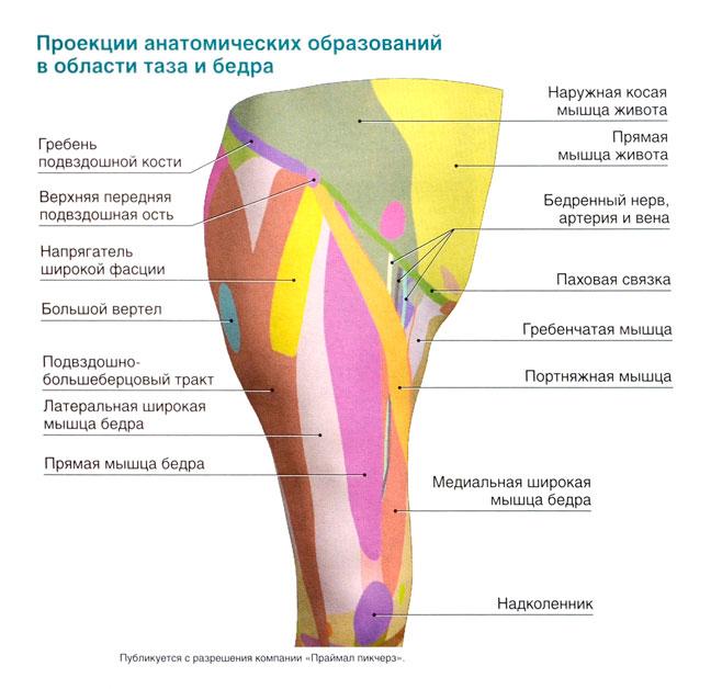 ушиб тазобедренного сустава в верхней части бедра