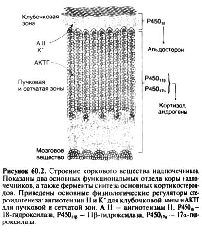 метирапон инструкция по применению - фото 6