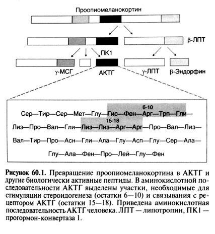 метирапон инструкция по применению - фото 10
