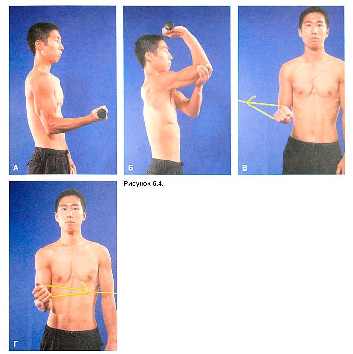 Укрепить локтевые суставы мышечные и суставные боли как лечить