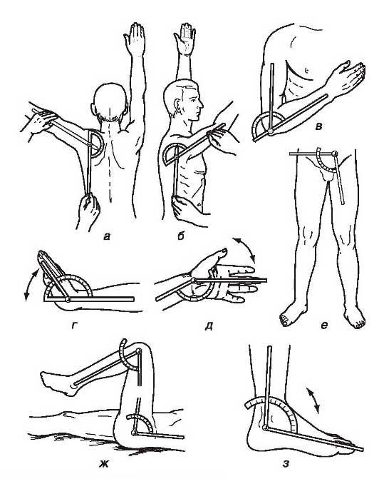 Градусная мера движения в меж позвоночных суставах морфология суставов головы животных