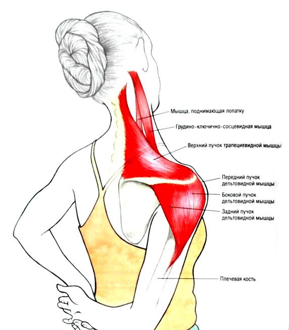 Расслаблению мышц спины и шеи - SpinaZdorov ru
