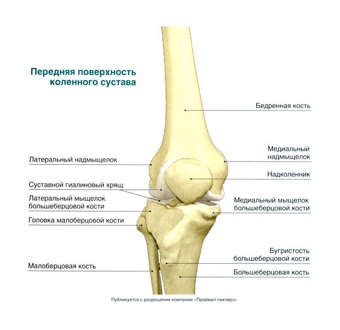 Кости в коленном суставе немецкая терапия для суставов
