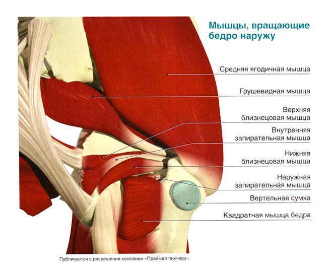 Чем лечить боль в мышцах тазобедренного сустава простые суставы на латыни