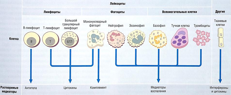 док фильм паразиты в организме человека