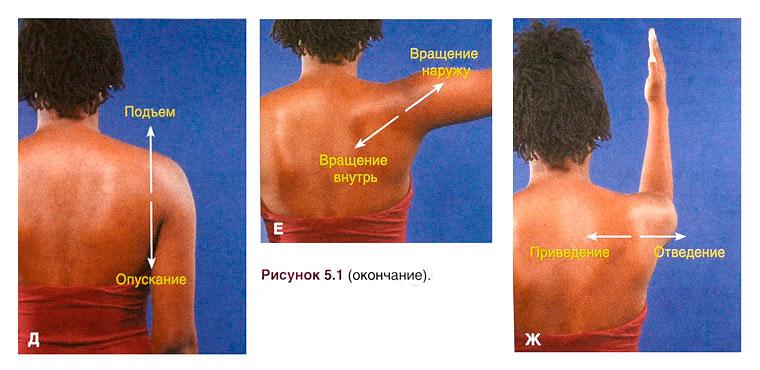 Болит плечо при отведении руки назад