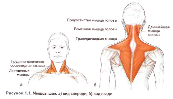 Файл:Stretching exercises1.jpg