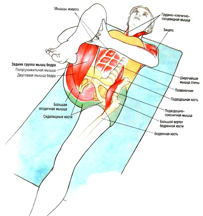 Сгибание сустава это как влияют болезни щитовидной железы на суставы