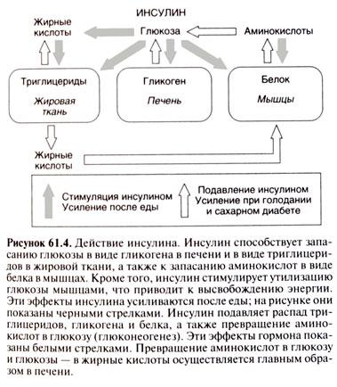Регуляция метаболизма