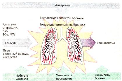 дневник бронхиальная астма