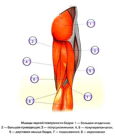 Болит нога задняя часть бедра народная медицина от заикания для ребенка