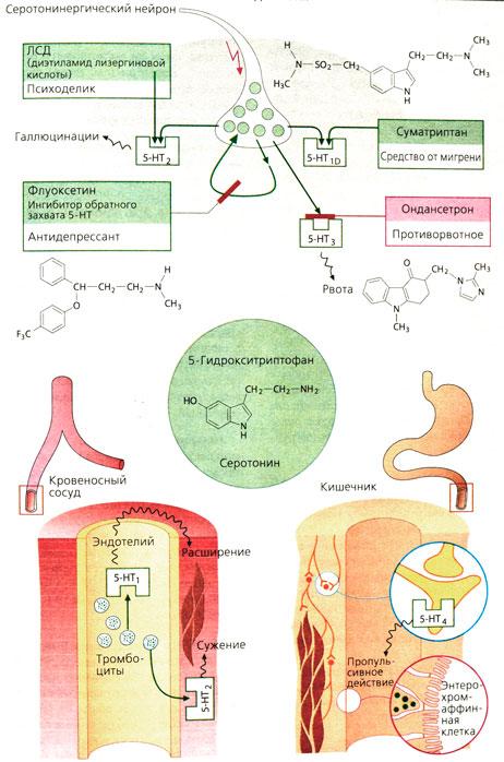 Psylocybin serotonin