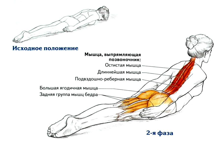 Эффективные упражнения для спины в домашних условиях