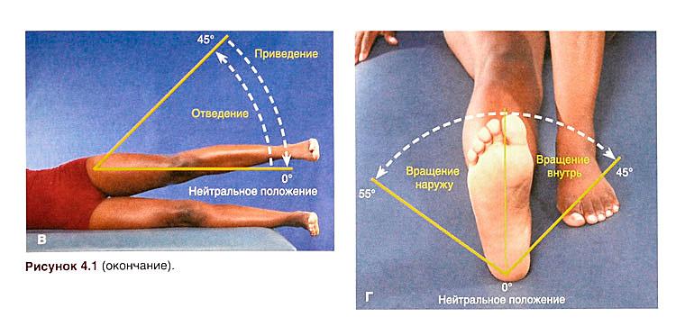 Вращение ног в тазобедренном суставе лечение тазобедренных суставов отсутствие ядер