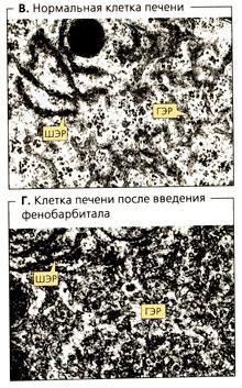 Биотрансформация лекарств
