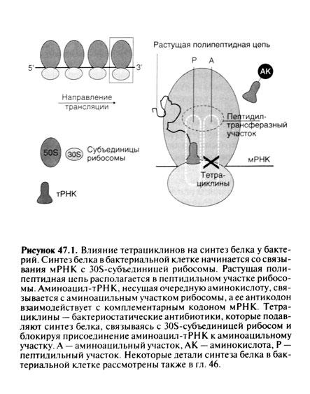 Фармакокинетика[править]