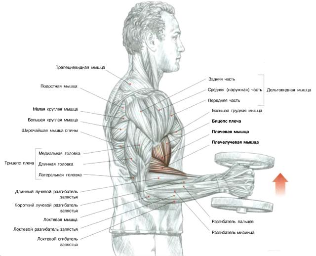 программы тренировок диетолога сергея сивца