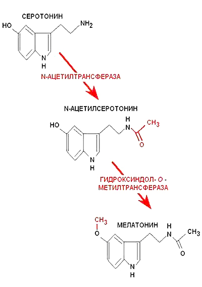 Файл:Melatonin3.jpg