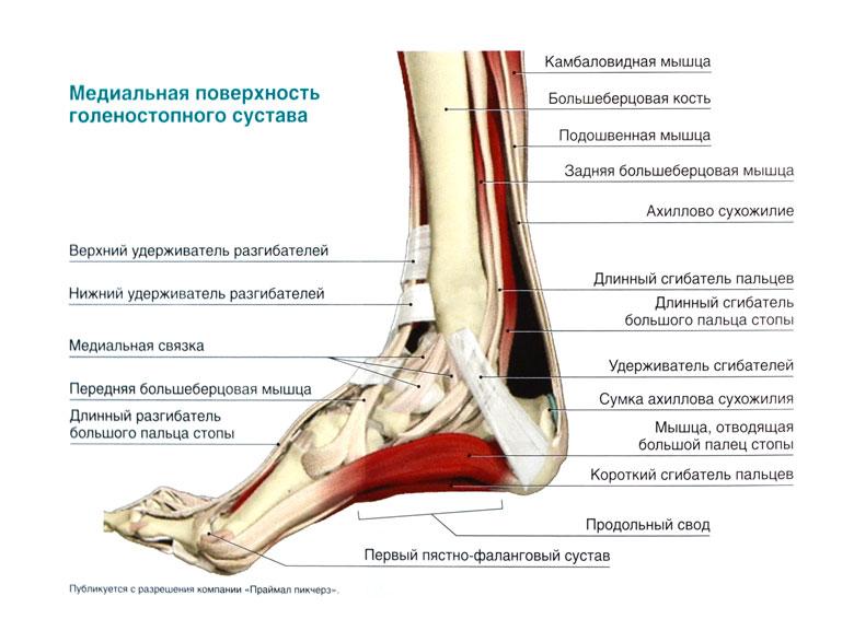Точка выше внутреннего голеностопного сустава на 4 пальца артроз коленного сустава санаторий