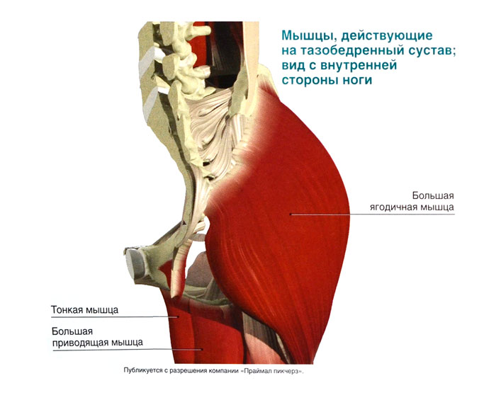 Упражнения при растяжении мышц тазобедренного сустава лечебная гимнастика коленный сустав