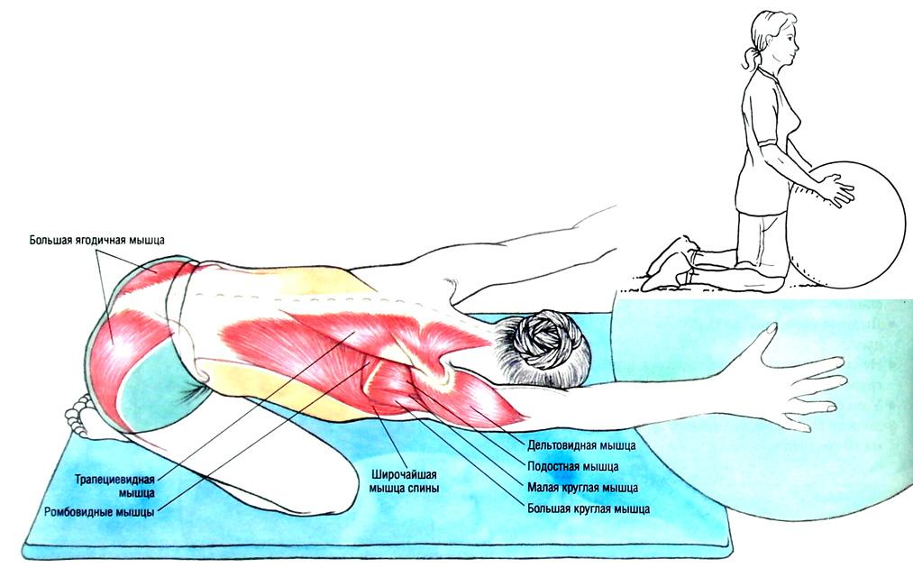 Растяжка плечевых суставов