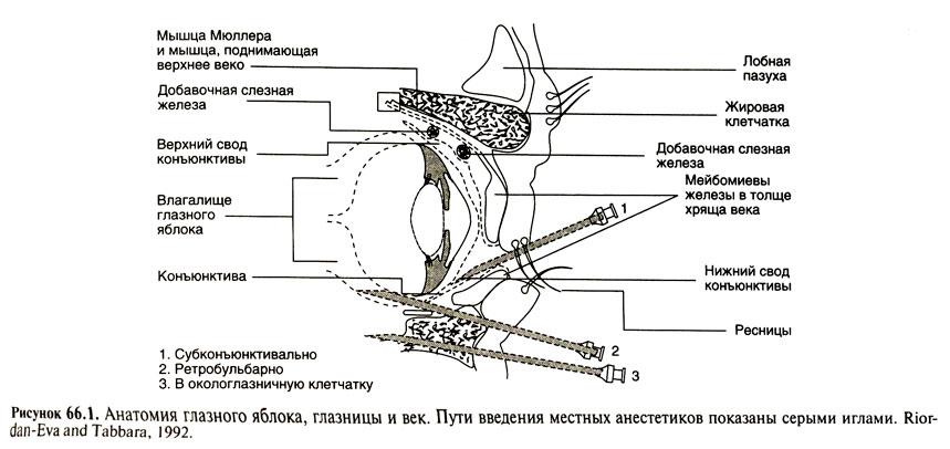 Капсула Боуменова