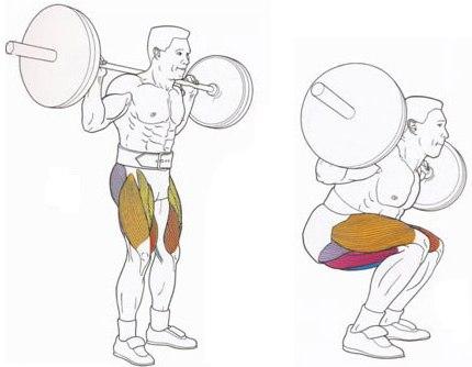 Задействованные мышцы[править]