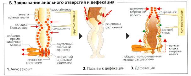 Анал Первый Раз Порно Ролики