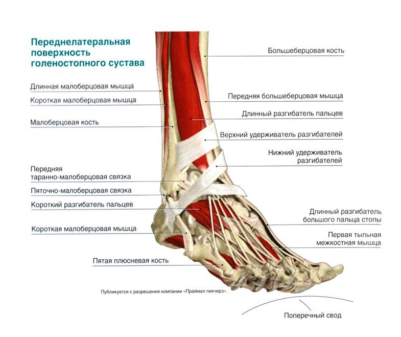 Тыльном сгибании стопы в голеностопном суставе мазь от боли в суставах колен диклофенак
