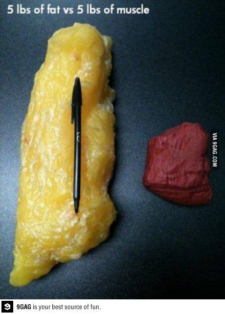 Как выглядит жир на животе