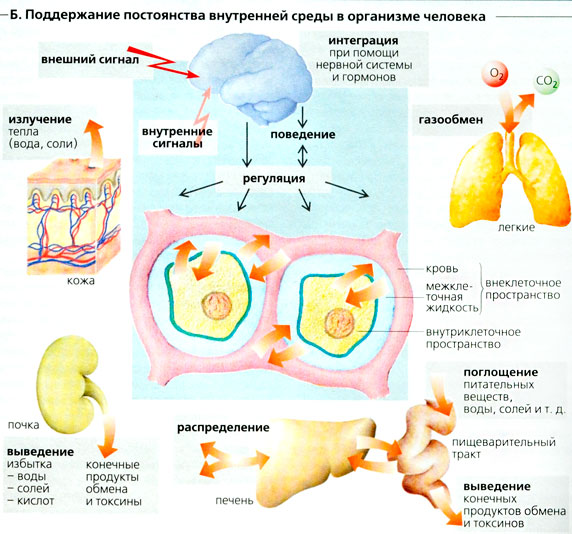 лекарство от холестерина народное
