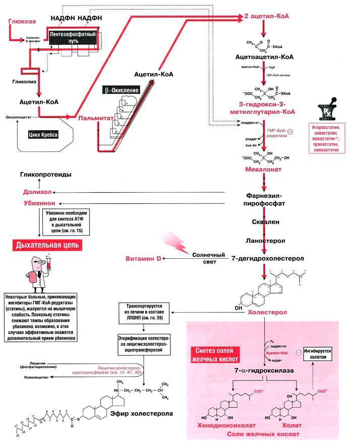 холестерин от углеводов