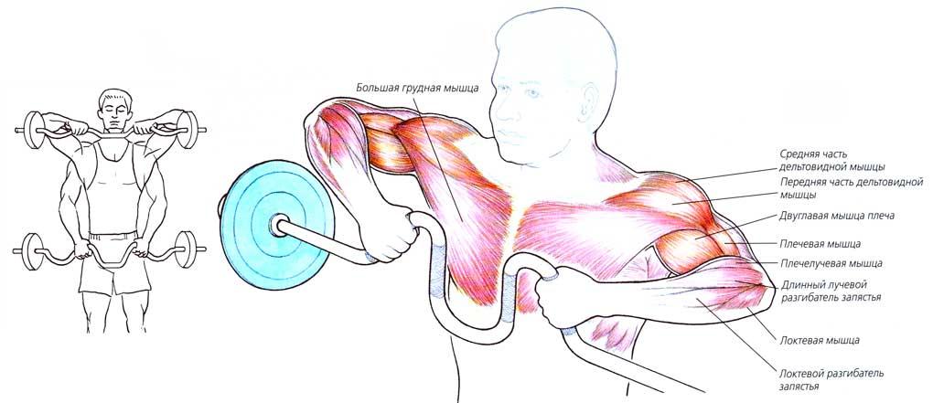 Упражнения с кривым грифом в домашних условиях