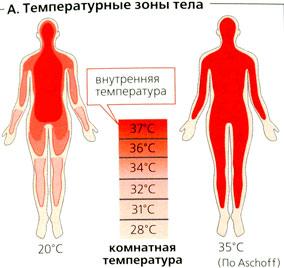 Снижение температуры тела с чем связано с