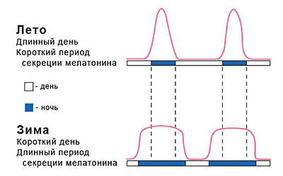 Файл:Melatonin2.jpg