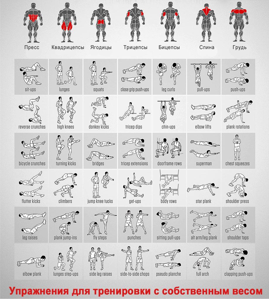 программа тренировок для похудения в фитнес зале